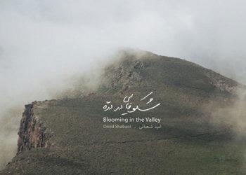 «شکوفایی دره» اثر امید شعبانی منتشر شد